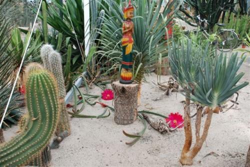 Anny Cactus